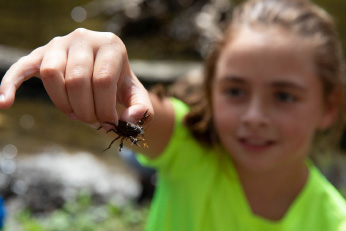 A young girl in a green shirt holding an insect at arms length.