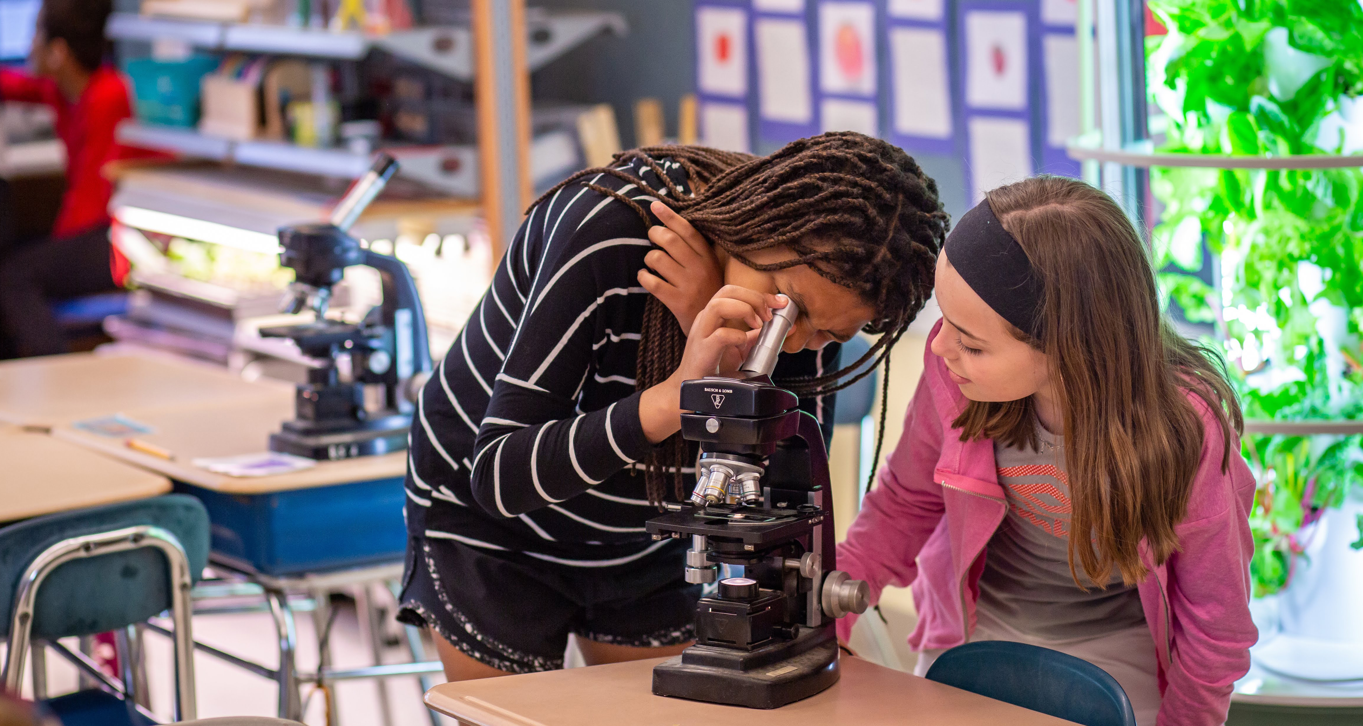 students using a microscope